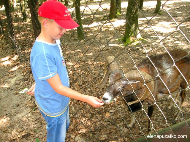 куди піти з дітьми будапешт угорщина фото 14