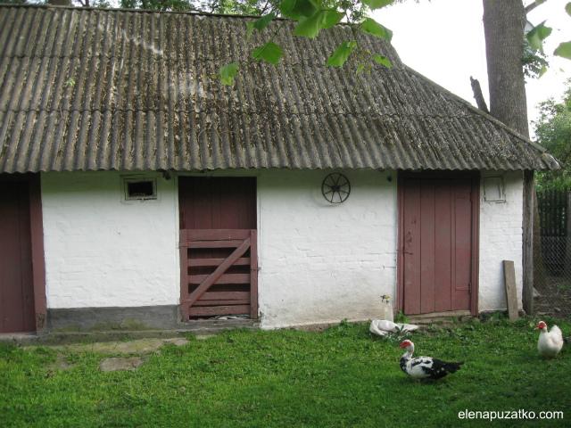 vishneviy-sad1