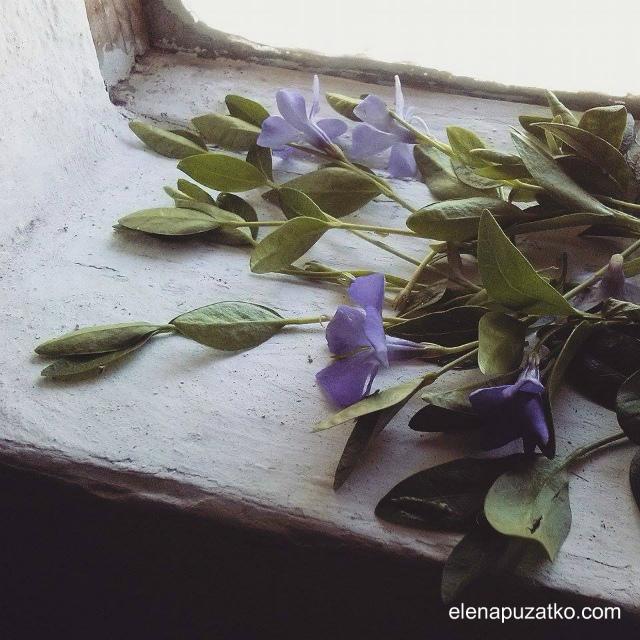 батьківщина тараса шевченка моринці шевченкове україна фото 14