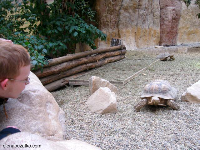 вроцлавський зоопарк фото 2