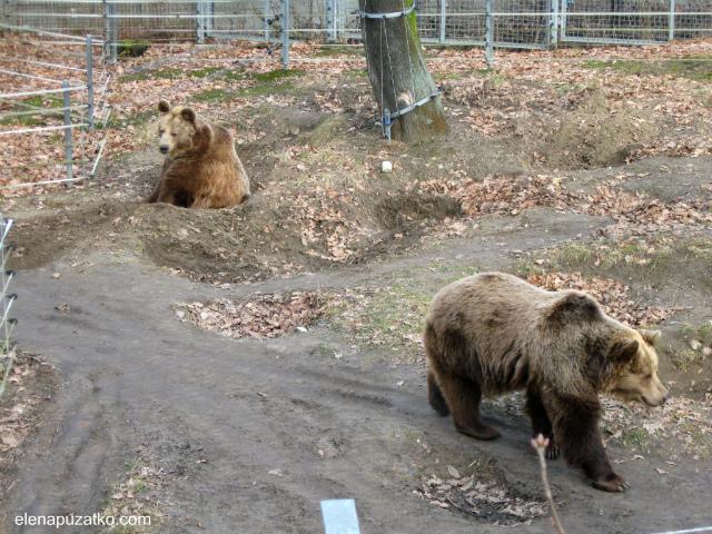 вроцлавський зоопарк фото 8