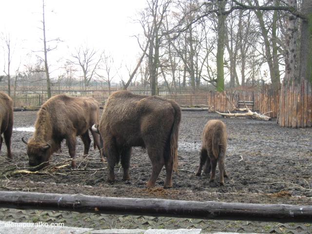 вроцлавський зоопарк фото 9