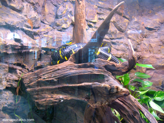 вроцлавський зоопарк фото 12