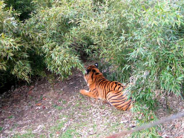 вроцлавський зоопарк фото 11