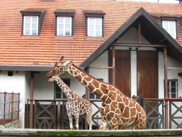 вроцлавський зоопарк фото 15
