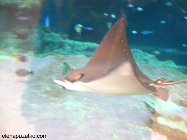 вроцлавський зоопарк фото 4