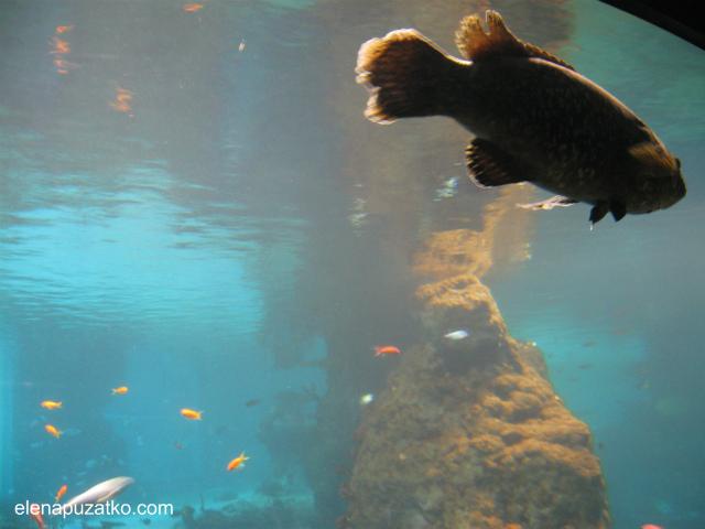 вроцлавський зоопарк фото 6
