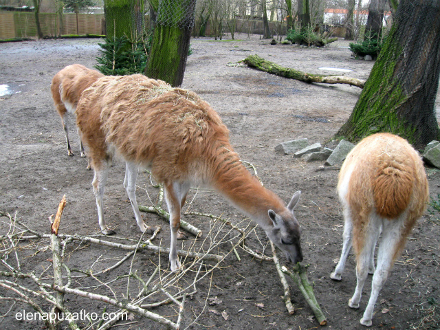 вроцлавський зоопарк фото 10