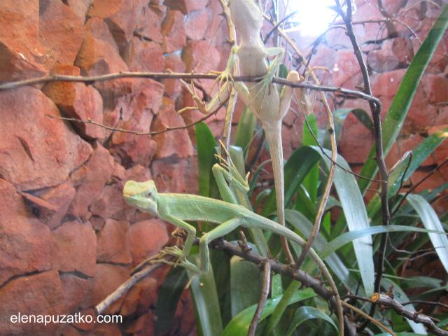 вроцлавський зоопарк фото 13