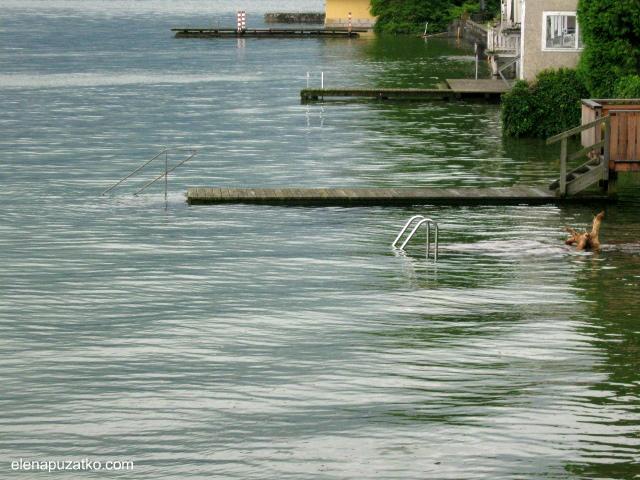 озерний замок орт австрія фото 9