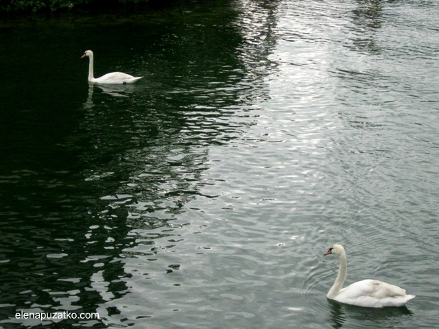 озерний замок орт австрія фото 2