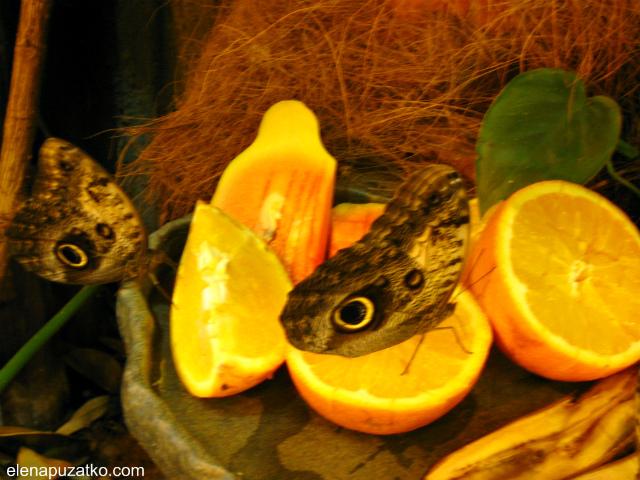 вроцлавський зоопарк фото 14