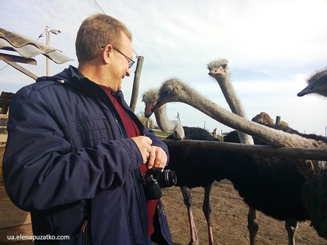 страусина ферма у селі софійка