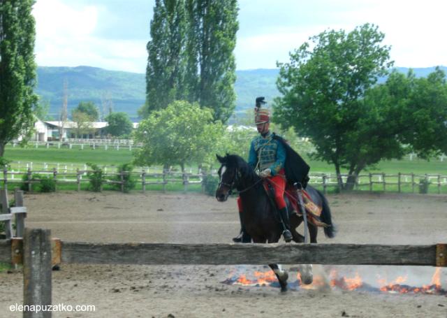 кінне шоу будапешт угорщина фото 9