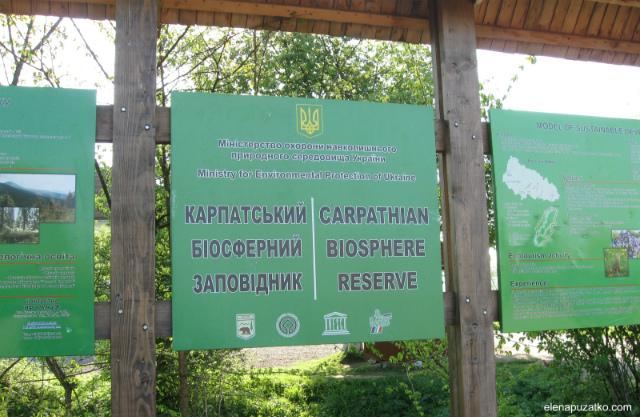 долина нарцисів україна фото 1