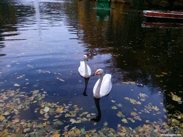 умань парк софіївка україна фото 53