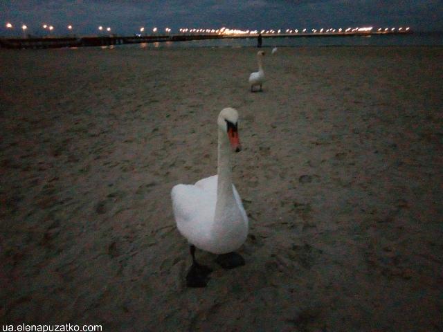 сопот курорт море в польщі польща труймясто фото 21