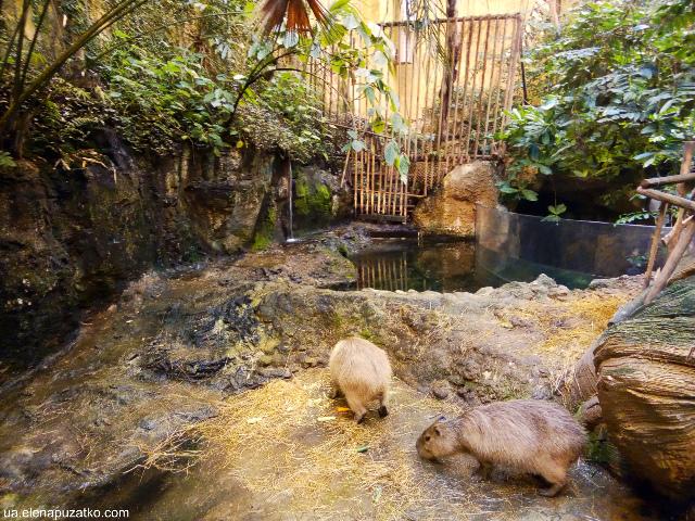 аквариум флория стамбул фото -11