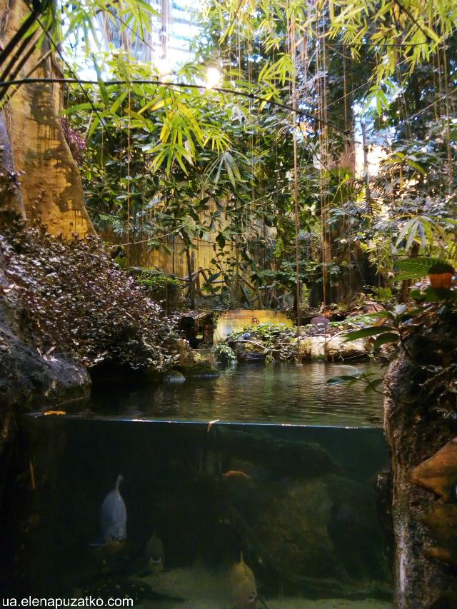аквариум флория стамбул фото -12