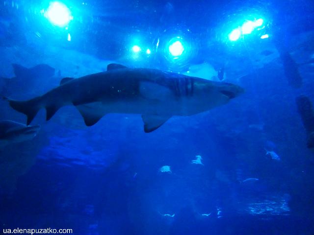 аквариум флория стамбул фото -13