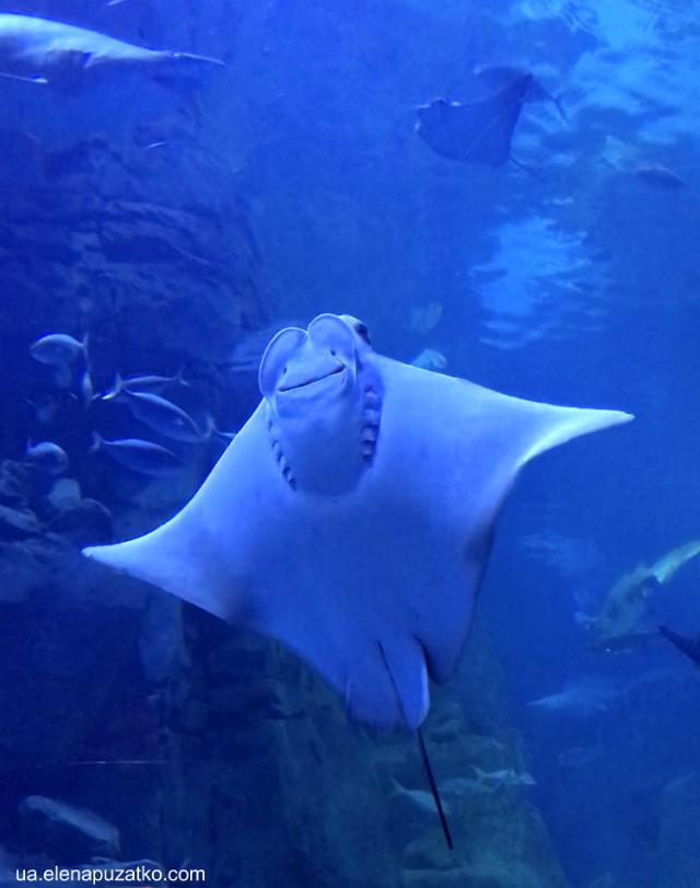 аквариум флория стамбул фото -14