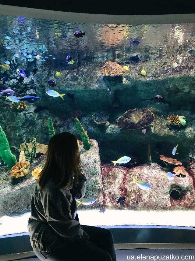 аквариум флория стамбул фото -15