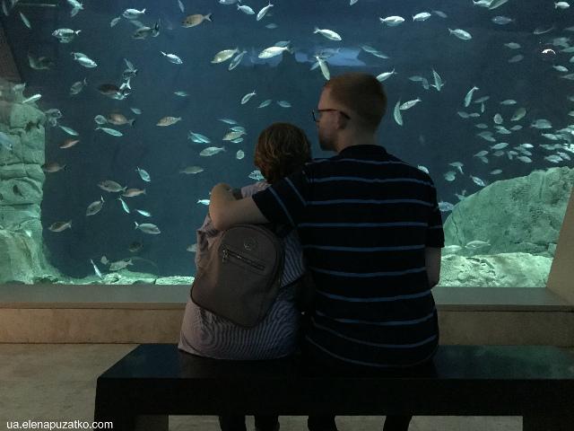 аквариум флория стамбул фото -16