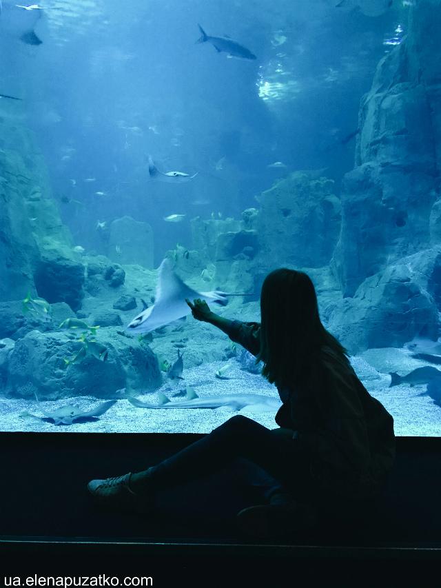 аквариум флория стамбул фото -17