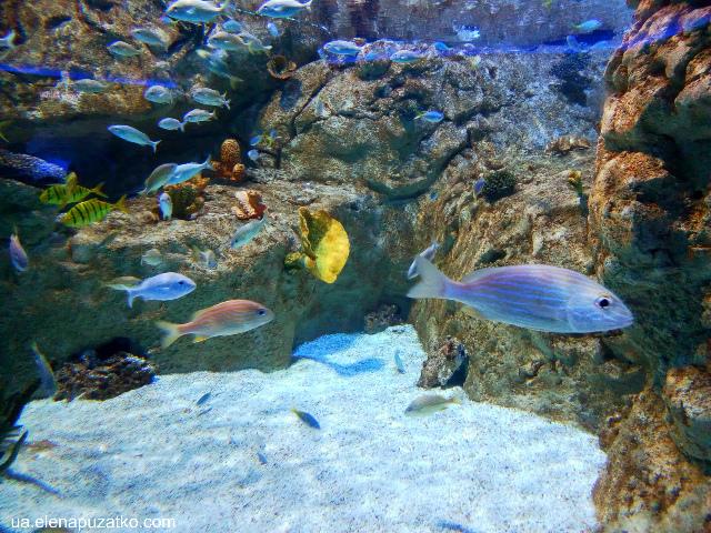 аквариум флория стамбул фото-2