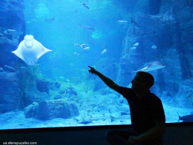 аквариум флория стамбул фото -5