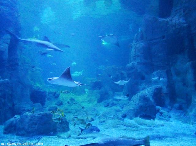 аквариум флория стамбул фото -6