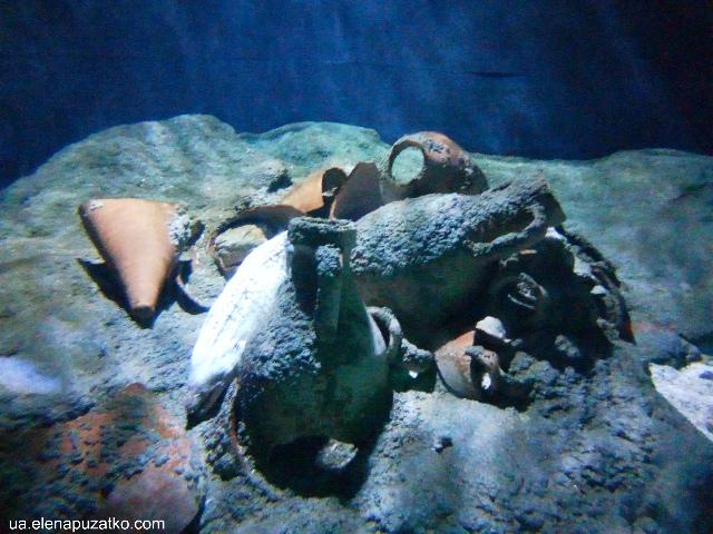 аквариум флория стамбул фото -7
