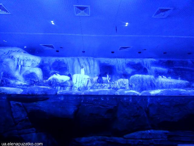 аквариум флория стамбул фото -9