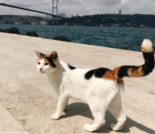 коти стамбулу фото -1