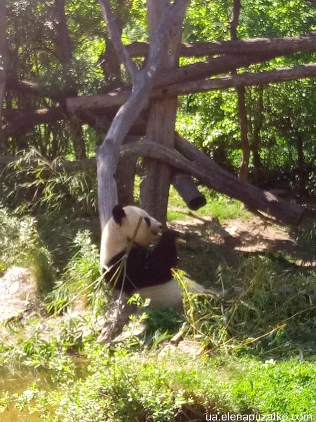 шенбрунн зоопарк відень фото-13