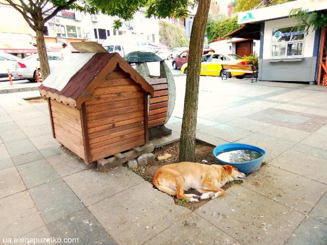 стамбул безпритульні тварини фото 12