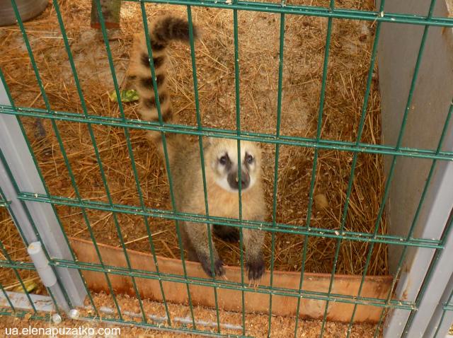 острів сакури володарка зоопарк фото 12