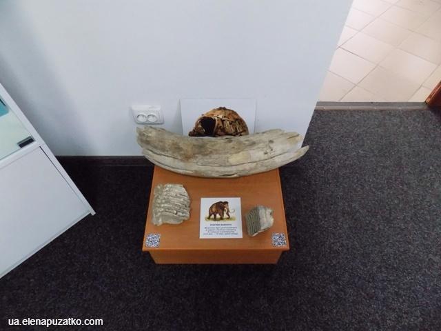 музей миронівка фото 1