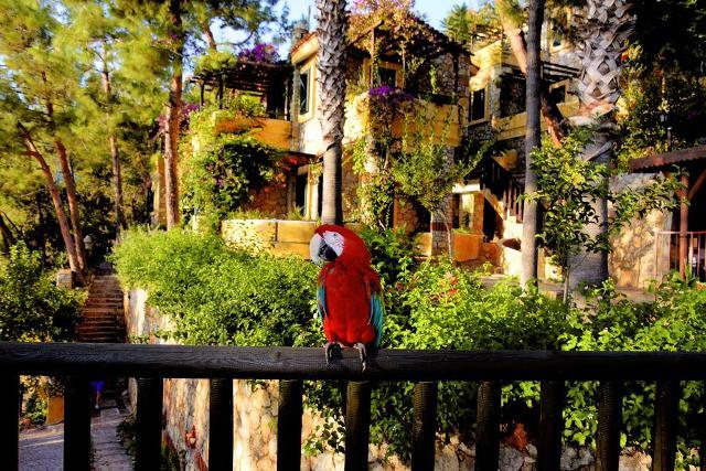 олюденіз кращі готелі фото 10