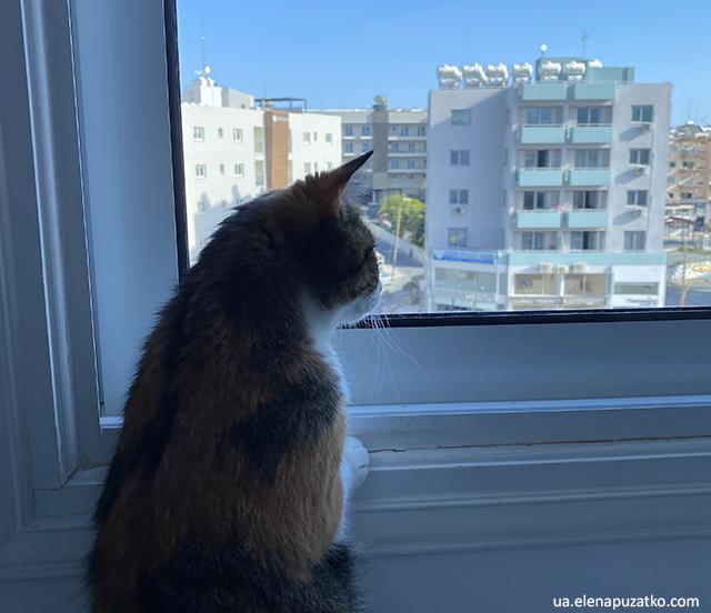 як подорожувати з котом фото 11