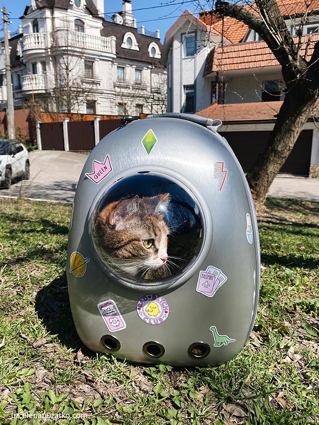 як подорожувати з тваринами фото 13